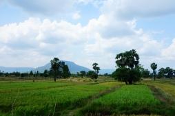 Entre montagnes et rizières